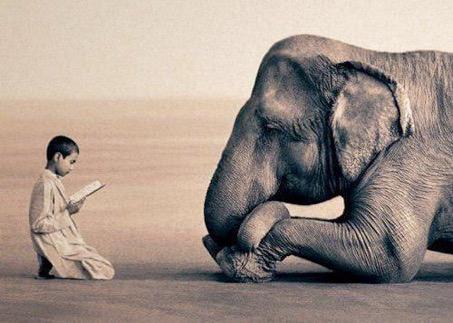 enfant et éléphant